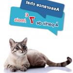 Assurance pour chat / meilleure assurance chat