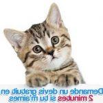 Assurance chat pas cher : assurance pour chat