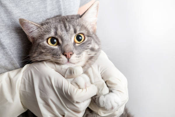 assurance maladie chat