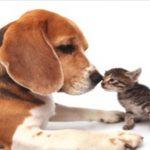 Assurance chien chat et meilleure assurance chat