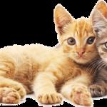 Assurance chien et chat et classement assurance chat