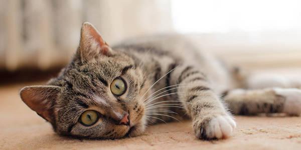 assurance maladie chat prix