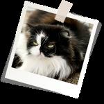 Assurance pour chat et assurer son chat