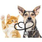 Assurer son chat pour assurance maladie chat