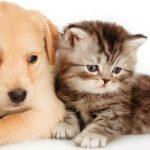 Assurance chien et chat ou assurance santé chat comparatif