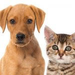 Assurance chat et classement assurance chat