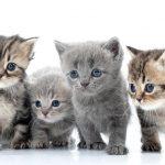 Classement assurance chat ou assurance chien et chat