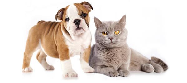 macif assurance animaux