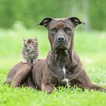 Self assurance animaux : macif assurance animaux