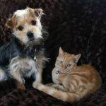Assurance santé animaux pour assurance pour animaux
