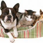 Assurance animaux carrefour / avis client self assurance animaux