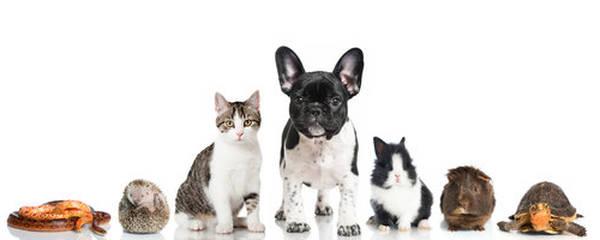assurance animaux de compagnie belgique