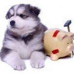 Gmf assurance animaux et avis client self assurance animaux