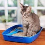 Assurance april animaux pour self assurance animaux