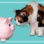 Comparateur assurance animaux : 60 millions de consommateur assurance animaux