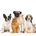 Gmf assurance animaux : assurance animaux gmf