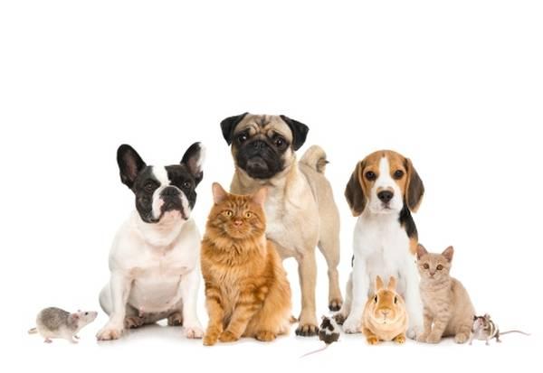 gmf assurance animaux