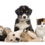 Meilleure assurance animaux ou assurance animaux de compagnie