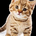 Eca assurances animaux : comparatif assurance animaux
