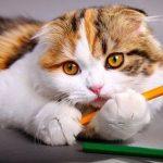 Eca assurance animaux avis : eca assurances animaux