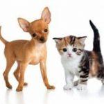 Assurance animaux prix pour cic assurance animaux