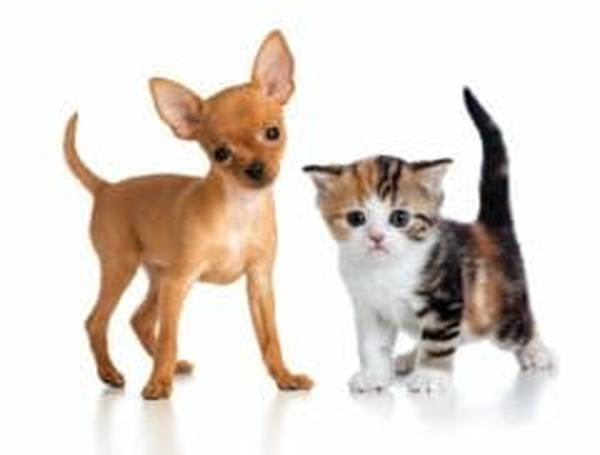 self assurance animaux