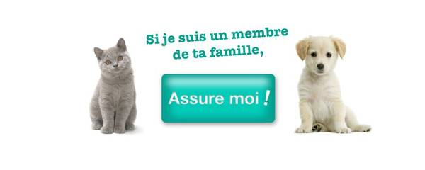 avis self assurance animaux
