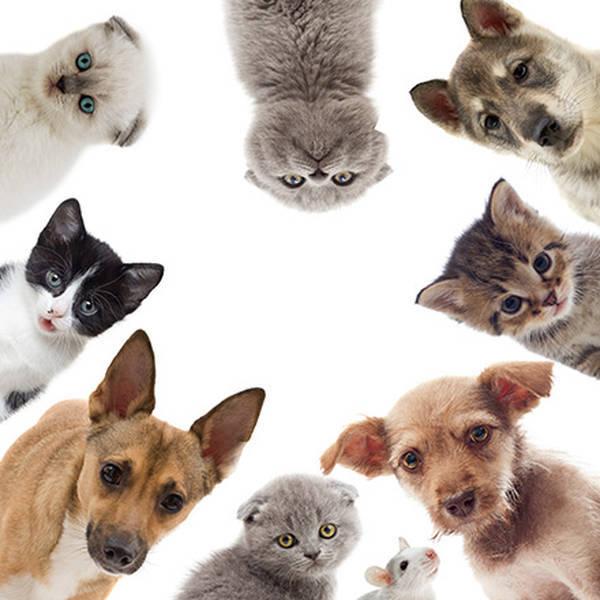 meilleure assurance animaux