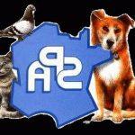 Assurance animaux gmf et eca assurance animaux avis