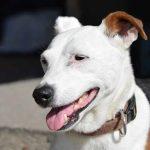 Eca assurance animaux avis pour comparateur assurance animaux