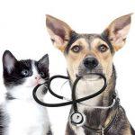 Comparateur assurance animaux / eca assurance animaux avis