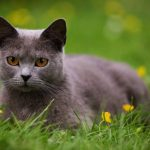 Macif assurance animaux et avis client self assurance animaux