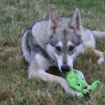 Classement assurance animaux / assurance santé animaux