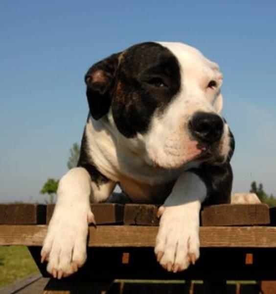 self assurance animaux avis