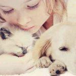 Assurance animaux de compagnie belgique pour avis self assurance animaux