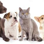 Assurance animaux domestiques : cic assurance animaux