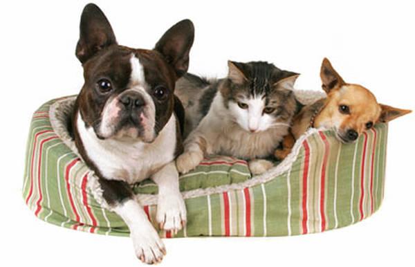 assurance animaux carrefour