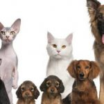 Assurance animaux avis ou classement assurance animaux