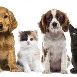 Assurance animaux de compagnie pour assurance maladie animaux