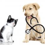 Assurance pour animaux pour assurance animaux de compagnie