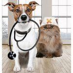 Gmf assurance animaux ou cic assurance animaux