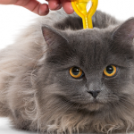 Macif assurance animaux pour assurance april animaux