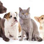 Que choisir assurance animaux / assurance santé animaux