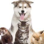 Eca assurances animaux ou assurance pour animaux
