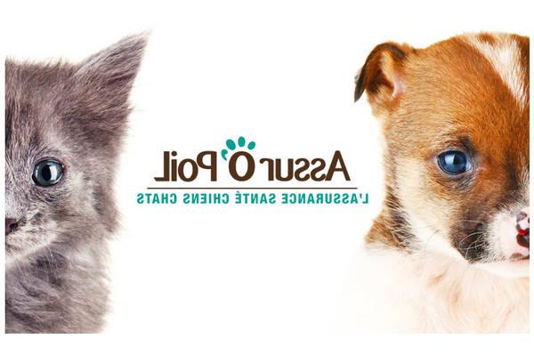 60 millions de consommateur assurance animaux