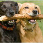Assurance april animaux / avis self assurance animaux