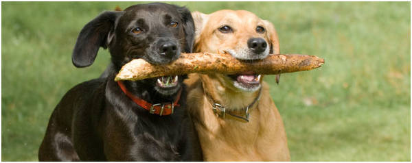 assurance animaux gmf