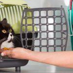 Eca assurance animaux avis et assurance animaux prix