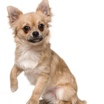 Assurance animaux de compagnie / assurance animaux gmf