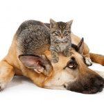 Self assurance animaux pour assurance animaux de compagnie belgique